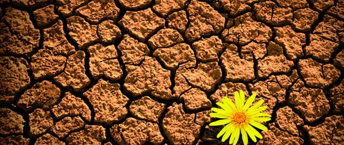 Webinar: Resiliência e Assertividade, como Fatores de Sucesso na sua Vida Profissional