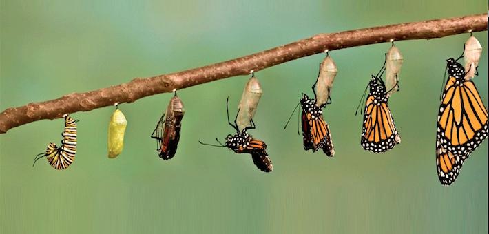 Webinar: Transformação Ágil, a Arte de transformar lagartas em borboletas